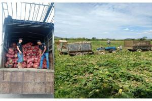 Chiến dịch 'giải cứu bí đỏ' hỗ trợ nông dân Đắk Lắk của Big C Việt Nam