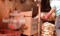 """VIDEO: """"Vạch mặt"""" chiêu trò phù phép nông sản Trung Quốc nhái Đà Lạt"""